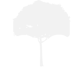 Branch Designs Logo